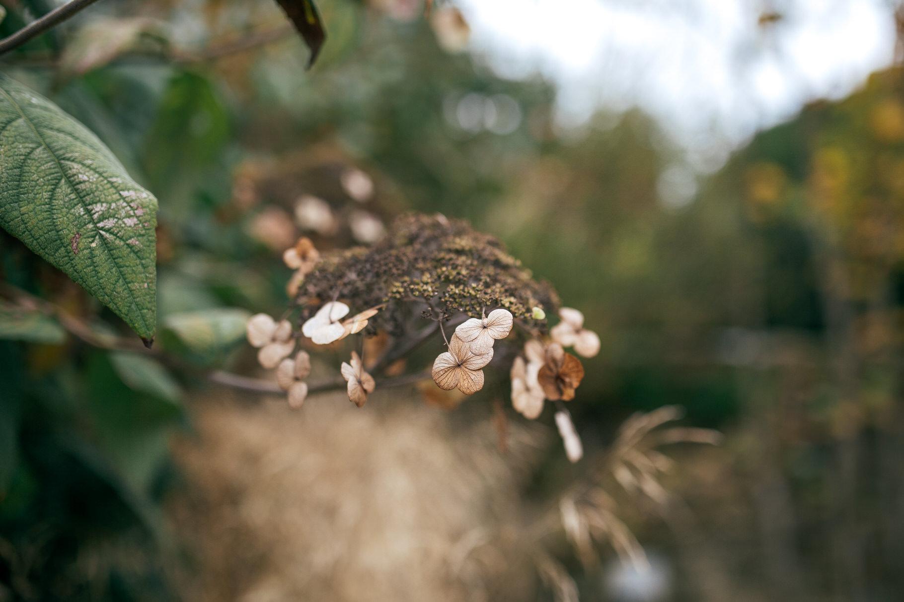 LeManoirWeddingPhotographyOxford011